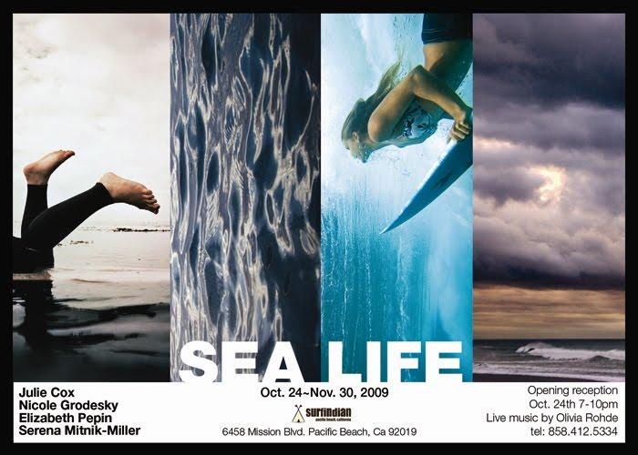 Nicole Grodesky Surf Phtotography Sea Life Exhibit